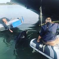 Chez @5_oceans_ on forme aussi les dauphins! Pas d'inquiétude à avoir, il est connu et se balade de port en port, il se prénomme «Randy»#randy#dauphin#golfedumorbihan#formation#bateau#boat#life#job#dauphin