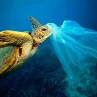 *Journée mondiale du sans sac plastique*Ce Samedi 03 Juillet c'est la journée mondiale sans sac plastique, ils représentent un danger pour l'écosystème marin et terrestre.Il suffit d'une seconde pour fabriquer un sac plastique, qui sera utilisé en moyenne pendant 20 minutes, et il mettra entre 100 à 400 ans à se désagréger.Ensemble, réduisons notre empreinte plastique.#journeemondialedusanssacplastique #protegeonsnosoceans #5oceanssemobilise #permisbateaux